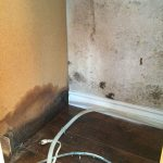 Things to know about Mold